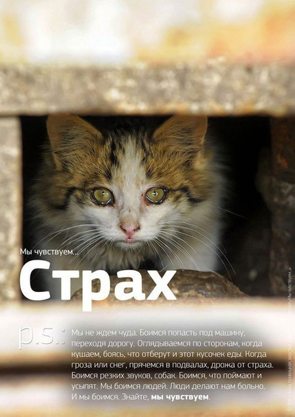 Фото №456241039 со страницы Роксоланы Шперчук