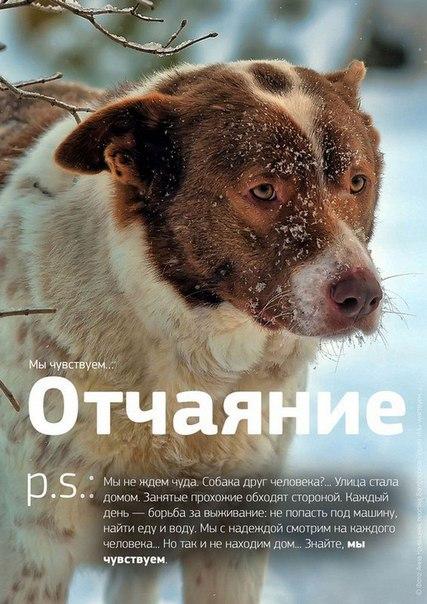 Фото №456241040 со страницы Роксоланы Шперчук