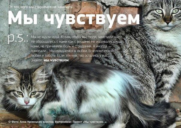 Фото №456241041 со страницы Роксоланы Шперчук