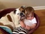Дети и собаки Прикольное видео, Новые Приколы, Шутки, Смешные ролики Юмор! Прикол! Смех Смешные прикОЛЫ