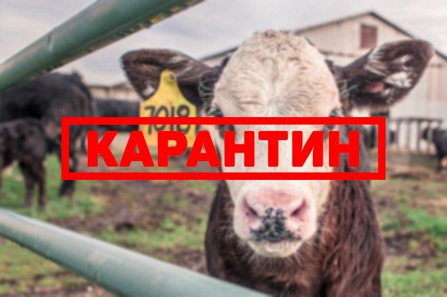 В одном из районов Ростовской области снят карантин по бешенству
