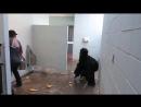 Горилла в туалете