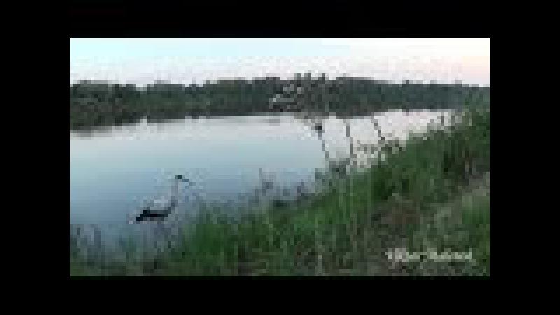 Утро на реке. Рассвело. Звуки природы. Птицы поют. Красивая природа. Релакс.