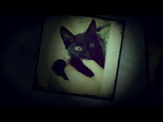 🐾 Луиджи, чёрный кот - Слайд-шоу