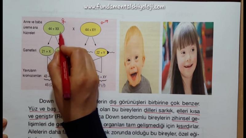 Kalıtım (Genetik) 9 Kromozomlarda Ayrılmama-Sendromlar