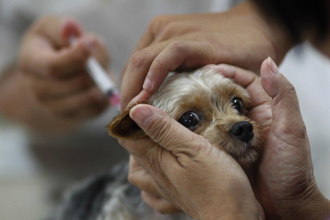 Ветеринарные врачи города Таганрога бесплатно прививают от бешенства собак и кошек