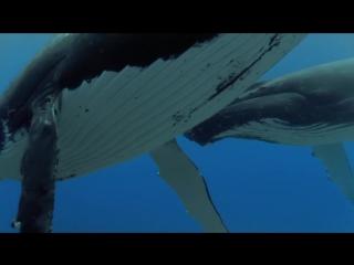 Жан Мишель Жар. Плач китов