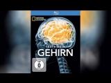 Испытайте свой мозг 2011 Test Your Brain