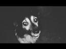 Satanic dog