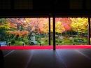 [4K]KYOTO JAPAN 京都の紅葉の名所 東山 Autumn Leaves in Kyoto Higashiyama Area 京都観光 清水寺、東