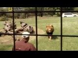 Несокрушимые 10. Покалеченный львами / The Indestructibles 2011 National Geographic - Видео Dailymotion