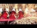 Зерноуборочный комбайн TORUM 750 на уборке кукурузы в Амурской области