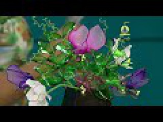 Vida com Arte   Flor ervilha de cheiro por Junko Miazato - 21 de Novembro de 2015