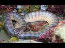 Самый сильный змеинный ЯД в мире HD Документальные фильмы про животных  (22.06.2016) hd