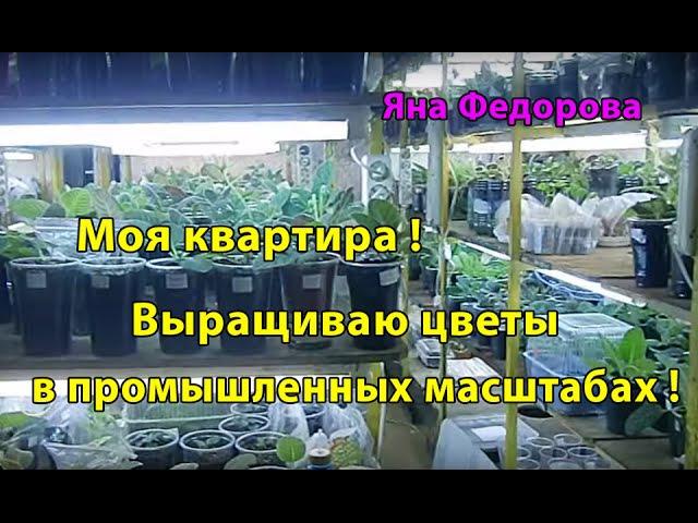 Моя квартира ! Выращиваю цветы в промышленных масштабах ! Такого ни у кого нет ! 🌱