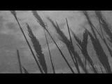 Mal Waldron Trio Moonglow &amp Stardust (Full Album)