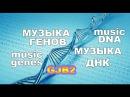 Музыка днк Как поет человеческий ген GJB2 translation mRNA