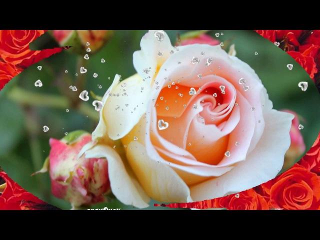 Как роза создана для восхищения, так женщина родится для любви