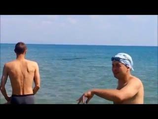 Дельфин на пляже в ст Благовещенская, Анапа 13 06 2015 г.