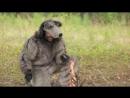О чем говорят животные - Волк Серия 3