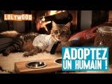 Adoptez un humain !