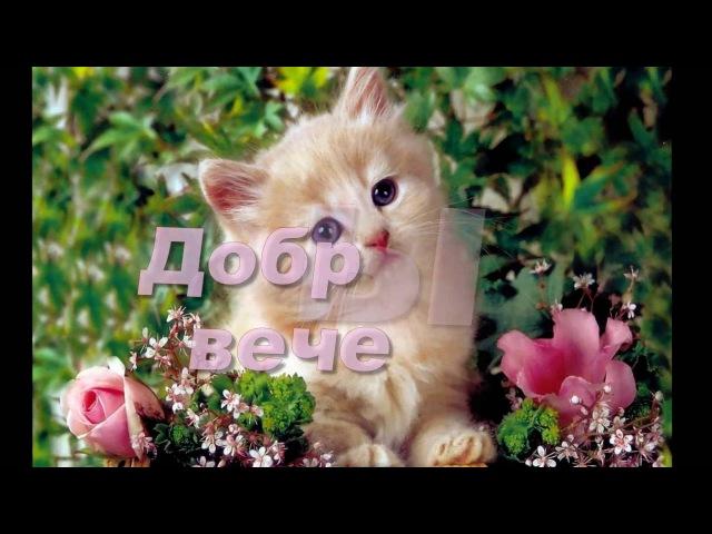 добрый вечер желаю счастья