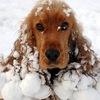 Выгул собак в Брянске