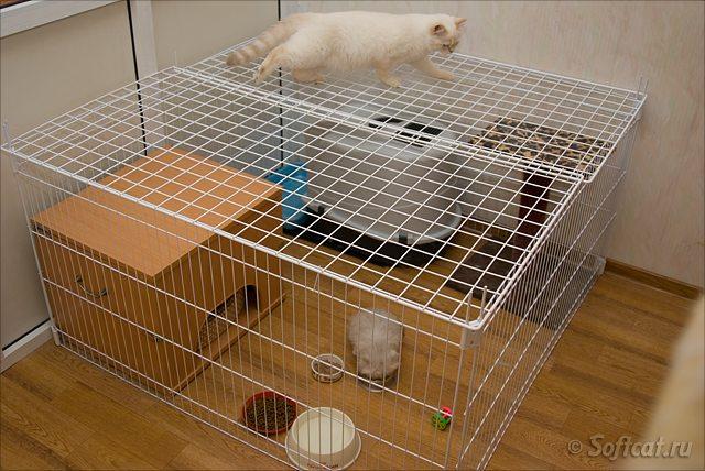 Клетка для кошки своими руками фото 98