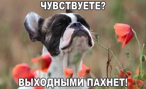 СБУ изъяла у скупщиков в Ривном партию янтаря стоимостью более полумиллиона гривен - Цензор.НЕТ 7615