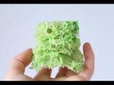 Мох бисквитный  Sponge moss