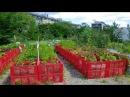Высокие грядки идеи для сада дачи и огорода дачные идеи своими руками