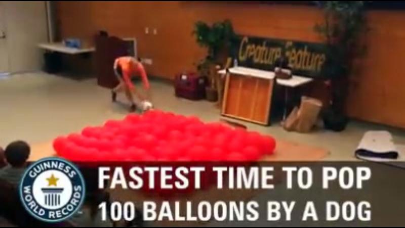 Рекорд Гинесса по лопанью 100 шариков