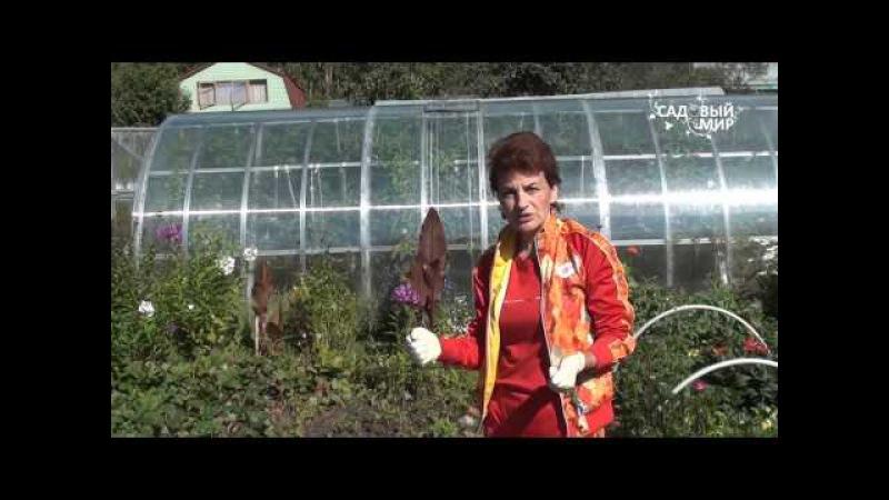 Земляничный клещ. Защита. Сайт Садовый мир