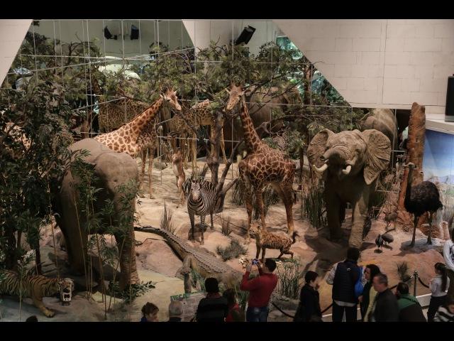 Москва Дарвиновский музей Moscow Darwin Museum
