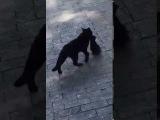 Заботливая мама-кошка в одесском Горсаду