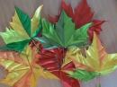 Фейерверк красок в осенних кленовых листьях канзаши
