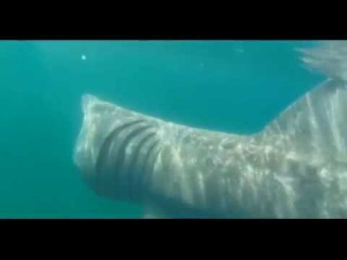 Isle of Man kayaker's close encounter with basking shark