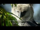 BBC Мир природы. Гарпия (Орлы Венесуэлы) / Monkey Eating Eagle of Venezuela (2010) HD - Видео Dailymotion