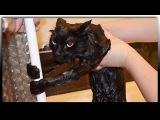 Смешное видео про животных  Приколы с животными Смешные кошки