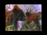 Serpiloff  Хитрая лиса  (видео - Юрий Климов, музыка и текст - Сергей Пилипенко)