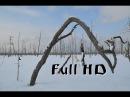 Средь зимних болот Поход на лесное озеро Чёрное Full HD
