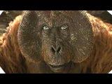 The Jungle Book AMAZING New 360 Video (2016)