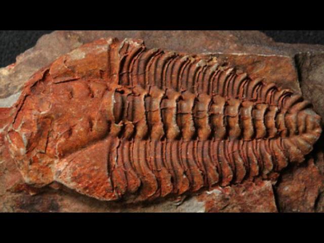 Новые методы исследования в палеонтологии (рассказывает палеонтолог Елена Наймарк)