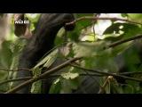 Дикая река Конго - Логово Кинг-Конга - видео ролик смотреть на Video.Sibnet.Ru