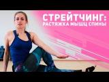 Стретчинг: растяжка мышц спины и талии