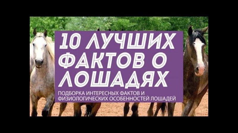 10 фактов о лошадях и интересные особенности непарнокопытных животных