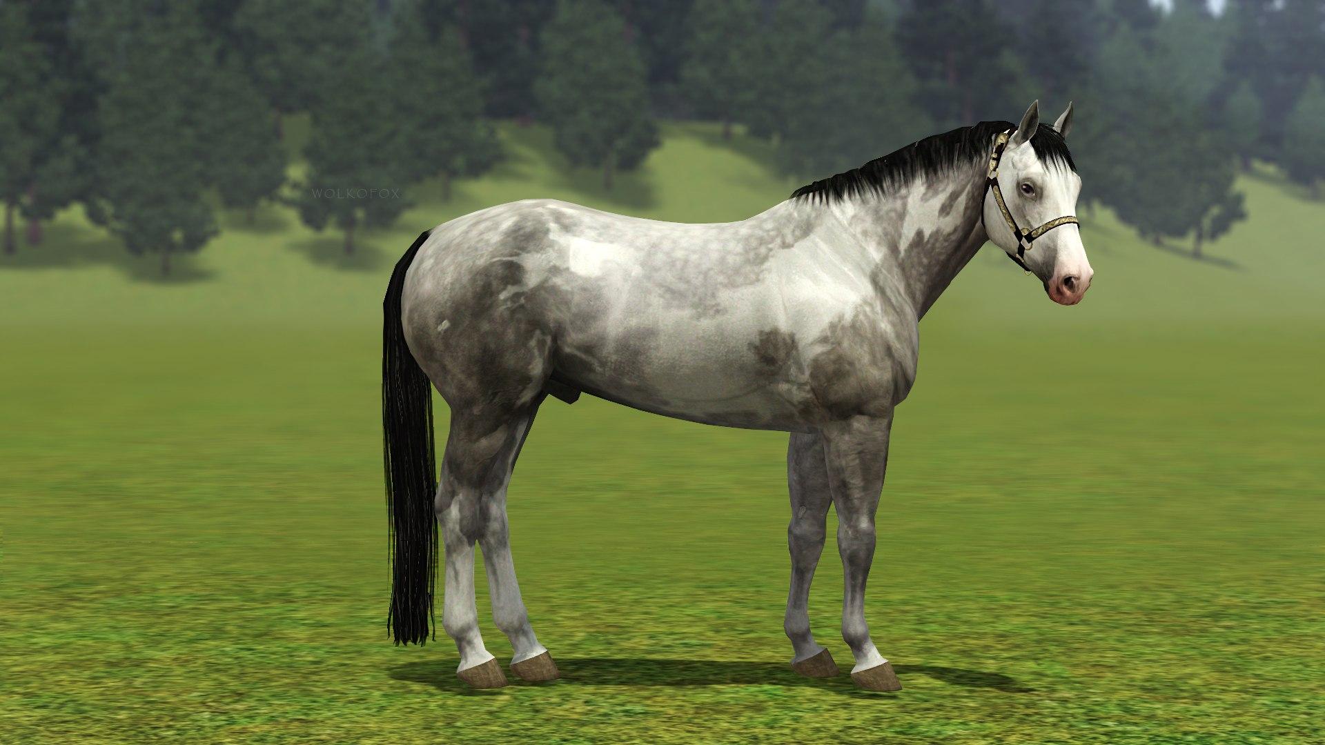 Регистрация лошадей в RHF 2 - Страница 4 -M3mfz05Gb8