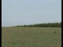 Мониторинг полей и борьба с сорняками (29-05-2009)