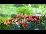 Городские цветы музыка Максим Дунаевский