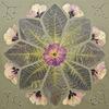 Ваш гербарий. Студия цветосложения Людмилы Солод
